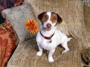 cachorro-com-flor